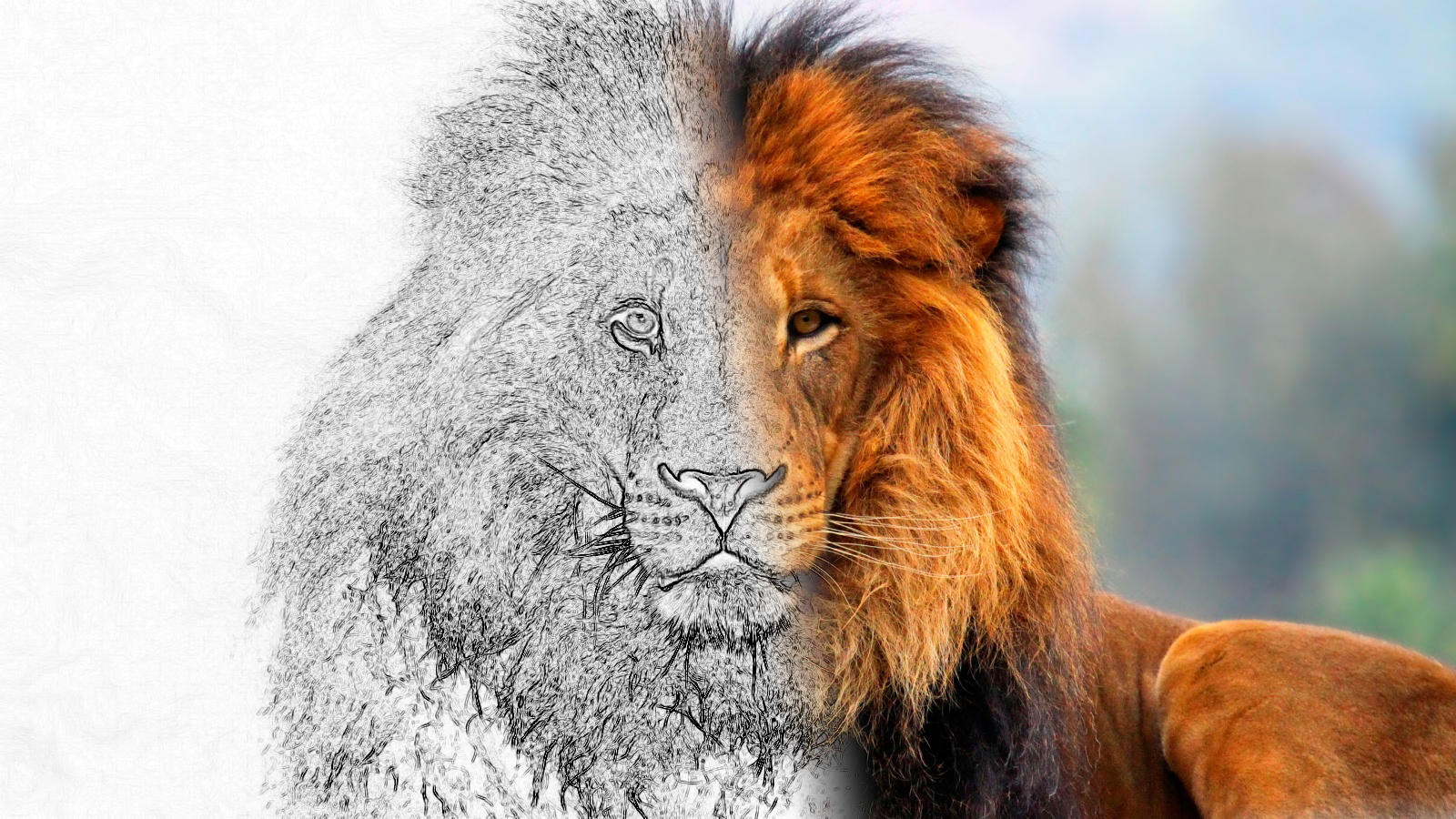 Transition from photo to sketchphotoshop tutorial photoshop lion 600x337 transition from photo to sketchphotoshop tutorial baditri Image collections